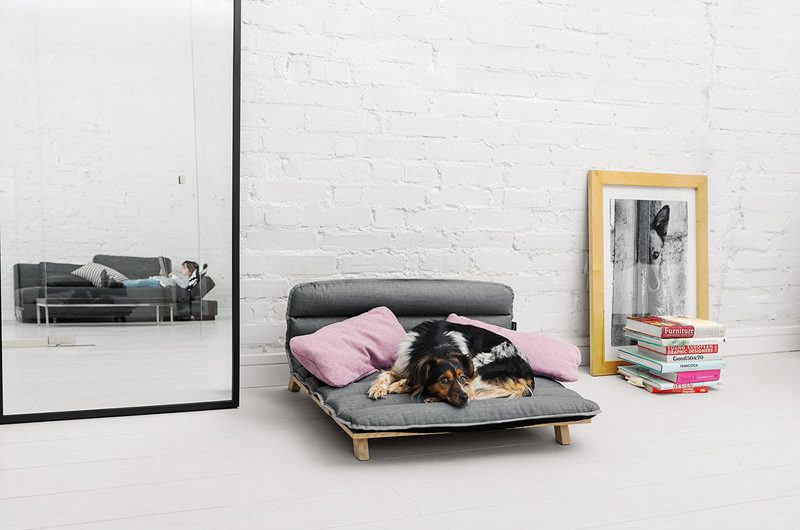 Best Dog Beds in 2020 | Warmth & Comfortable